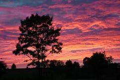 solnedgång för 2 orange fotografering för bildbyråer