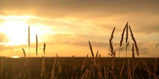 solnedgång för 2 steveston Royaltyfri Foto