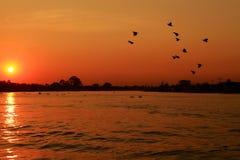 solnedgång för aftonflodsommar Arkivbilder