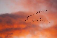 Solnedgång för fåglarna Arkivfoton