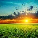 Solnedgång för grönt gräs och apelsin royaltyfri bild