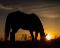 Solnedgång för hästsilhouettesoluppgång Arkivbild