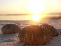 Solnedgång för havsgatubarn Arkivbilder