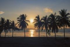 Solnedgång för kokosnötpalmträd för härlig kontur söt lantgård mot bakgrund i den tropiska ön Thailand ny kokosnöt på  arkivbilder