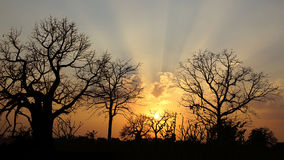 solnedgång för mandu för baobabindia liggande royaltyfri fotografi