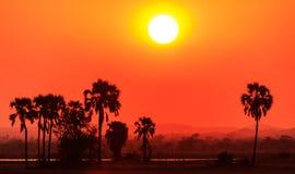 Solnedgång för orange glöd i ett afrikanskt landskap Arkivfoton