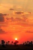 Solnedgång för orange glöd i ett afrikanskt landskap Arkivbild