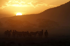 solnedgång för serengeti ii arkivfoto