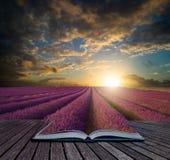 Solnedgång för sommar för bokbegrepp vibrerande över lavendelfältlandskap Arkivbild