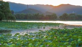 Solnedgång för sommarslott Royaltyfri Bild