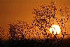 solnedgång för strandkidldast Royaltyfri Fotografi