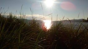Solnedgång från gräset royaltyfria foton