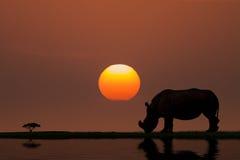 Solnedgång i Afrika Royaltyfri Fotografi