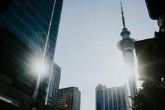 Solnedgång i Auckland Royaltyfri Foto
