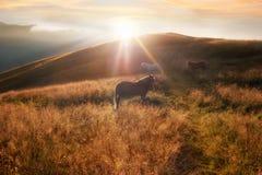 Solnedgång i bergnaturbakgrund Hästkontur på ogenomskinlighet Fotografering för Bildbyråer