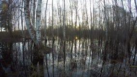 Solnedgång i björkskog med vattenfloden, tidschackningsperiod arkivfilmer