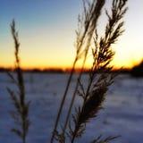 Solnedgång i bokeh Arkivbild