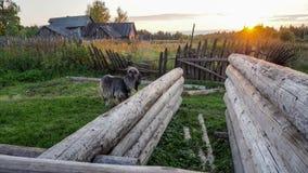 Solnedgång i byn Royaltyfri Bild