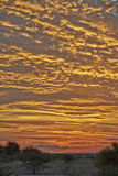 Solnedgång i central Kalahari lekreserv arkivbild