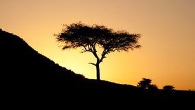 Solnedgång i den afrikanska savannahen royaltyfria foton