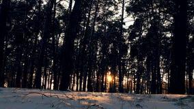 Solnedgång i den frostiga julskogen för vinter Arkivbilder