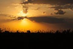Solnedgång i den lösa naturen Arkivfoton