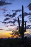Solnedgång i den Sonoran öknen Royaltyfri Bild