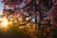 Solnedgång i den tjeckiska Skotska högländerna Arkivfoto