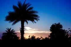 Solnedgång i djungel Arkivfoton
