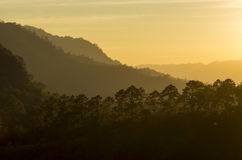 Solnedgång i djungeln Arkivfoton