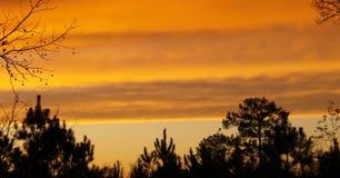 Solnedgång i djupa östliga Texas 1 Arkivfoton