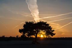 Solnedgång i dynerna Royaltyfri Bild