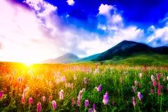 Solnedgång i en blommig äng arkivfoto