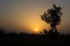 Solnedgång i en djungel Royaltyfri Fotografi