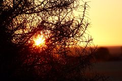 Solnedgång i en paddock royaltyfri fotografi