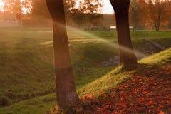 Solnedgång i en parkera Royaltyfria Foton