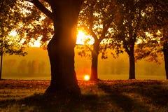 Solnedgång i en parkera Royaltyfri Bild