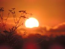Solnedgång i ett fält av gräs nära Royaltyfri Foto