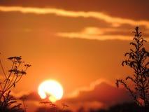 Solnedgång i ett fält av gräs nära Arkivfoto