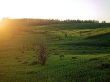 Solnedgång i ett fält på utkanten av byn Royaltyfri Foto