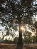 Solnedgång i ett träd royaltyfri foto