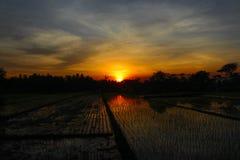 Solnedgång i fält Arkivfoton