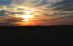 Solnedgång i fält Fotografering för Bildbyråer