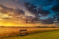 Solnedgång i fält i sommar Arkivbilder