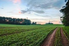 Solnedgång i fältet Royaltyfri Bild