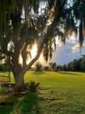 Solnedgång i florida? arkivbilder