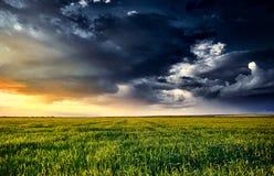solnedgång i grönt fält, vårlandskap, ljus färgrik himmel och moln som bakgrund Royaltyfri Bild