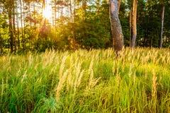 Solnedgång i höstskog Arkivbilder