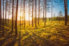 Solnedgång i höstskog Royaltyfri Foto