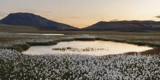 Solnedgång i Island med den bomullsgräs, sjön och berg royaltyfria bilder